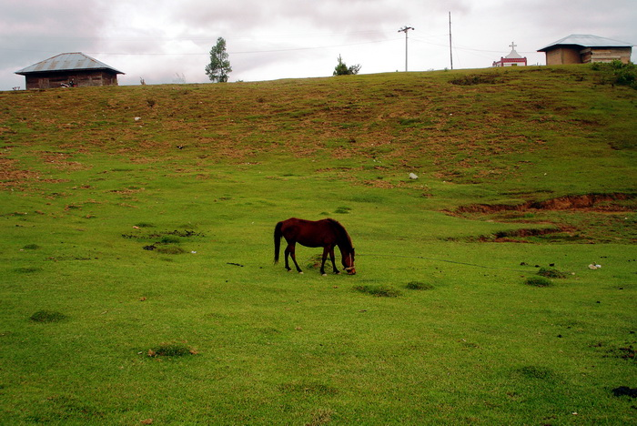 we can see horses farm in the valley - top of Samosir Island. (photo: joko guntoro)