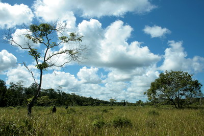 a large area of grass in the midle of swamp wildlife reserves (photo credit: joko guntoro)