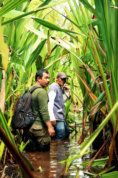 trekking must through the pet swamp and muddy (photo credit: joko guntoro)