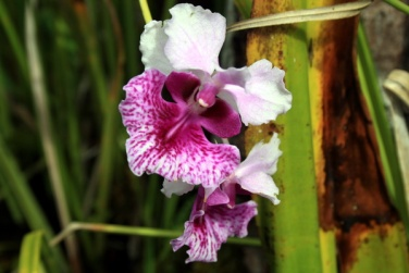 after lunch, we continue the trip and it was interesting, we found a kind of forest orchid, beautiful (photo: joko guntoro)