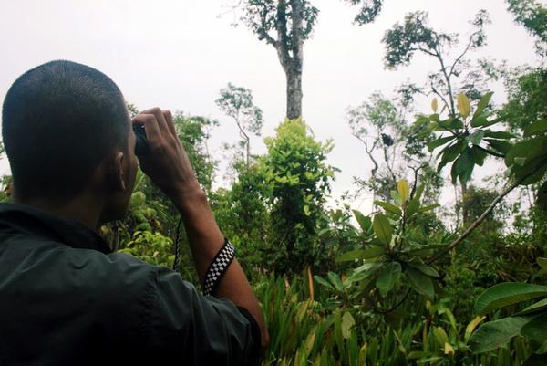 we tried to get back to our camp in Muara Cinendang. Then, wait, we saw an Orang utan (photo: joko guntoro)