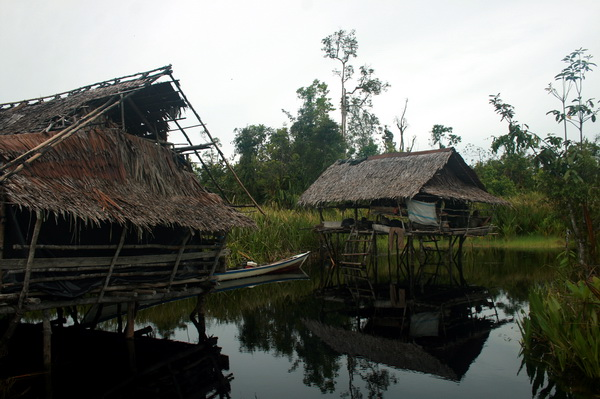 we spent two night in this broken house. this house, if we can say it as a house, is temporary place for fishermen to fishing in the swamps. Usually they fishing in the swamps about a week, so this is the reason why this place is built. (photo credit: joko guntoro)