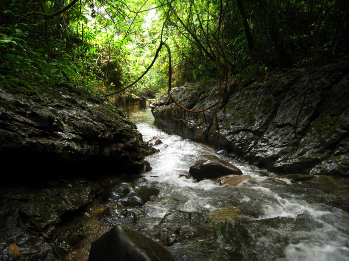 in the forest, you can find small rivers to control the water flow and supply to population in cities (photo credit: joko guntoro)