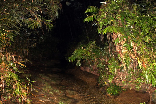 habitat of Bufo asper (photo: joko guntoro)