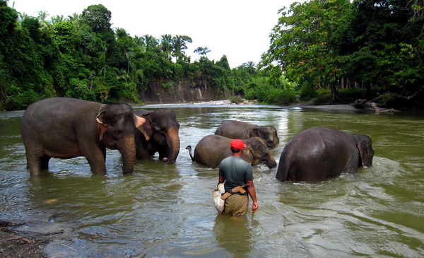 bathing the elephants (photo credit: joko guntoro)